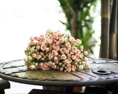 Rosas de pitiminí