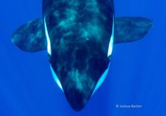 One Look Into This Orca's Eyes Will Inspire You To Fight For Their Freedom
