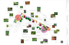 process_plantingplan_lg.jpg (2530×1664)