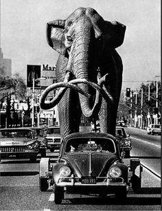 El escultor Howard Ball lleva su escultura de un mamut de 4 metros de alto y 8 de largo en su Volkswagen Gol.