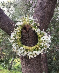 """Diane Alexandre on Instagram: """"When you take what is offered #springgift"""" The Shining, Tree Of Life, Grapevine Wreath, Grape Vines, Roots, Floral Wreath, Trees, Wreaths, Instagram"""