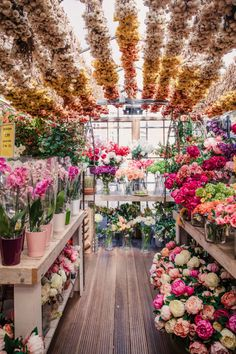 Bloemenmarkt in Amsterdam. I had to check out the world's only floating flower market! Wanderlust bucket list of places to travel and a visit on a vacation trip. Places to visit in Europe. F4 Boys Over Flowers, Pretty Flowers, Purple Flowers, Exotic Flowers, Yellow Roses, Fresh Flowers, Pink Roses, Most Beautiful Flowers, Pink Peonies