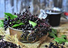 Elderberry Plant, Elderberry Juice, Elderberry Recipes, Elderberry Health Benefits, Home Remedies, Natural Remedies, Elderberry Supplement, Digestion Difficile, Salud Natural