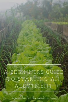 Have you just started an allotment or gardening but need some tips on where to begin? Read our guide for beginners here: