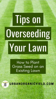 Lawn And Garden, Home And Garden, Garden Tips, Reseeding Lawn, Best Grass Seed, Planting Grass Seed, Lawn Repair, Growing Grass, Lawn Care Tips