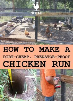 You can make your own chicken run out of dirt-cheap materials, some of which are probably lying around your back yard right now. Photos and videos included. Source by oakhh and me ideas Cheap Chicken Coops, Diy Chicken Coop Plans, Easy Chicken Coop, Chicken Pen, Chicken Coup, Building A Chicken Coop, Chicken Lady, Chicken Run Ideas Diy, Small Chicken