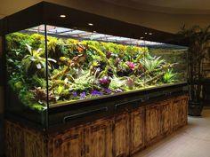 Terrarium And Aquarium 1000 Aquarium Ideas Reptile Habitat, Reptile House, Reptile Room, Reptile Cage, Reptile Enclosure, Chameleon Enclosure, Aquarium Terrarium, Reptile Terrarium, Garden Terrarium