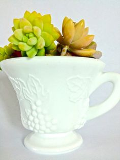 Cute Succulent Pots Tea Cups Ideas For 2019 Succulent Outdoor, Succulent Bowls, Succulent Centerpieces, Blue Succulents, Succulents In Containers, Succulents Garden, Glass Tea Cups, White Cups, Indiana Glass