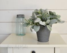Fuzzy lambs ear is arranged in a gray, tin, heart-stamped pot. Farmhouse Centerpiece; Greenery Arrangement; Grey Farmhouse Decor; Rustic Centerpiece; Rustic Decor.