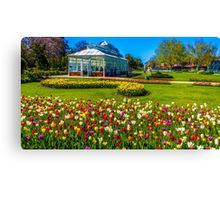 Tulips in Full Bloom at the Conservatory - Bendigo, Victoria Canvas Print