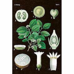 Sköna Tingin vintage aiheisella syreeni kasvipostikortilla voit lähettää ystäville upeat tervehdykset tai onnittelut. Postikortissa on syreenin osat piirrettynä kasvistoksi todella aidon näköisinä Pom Poms, Vintage Posters, Plant Leaves, Plants, Products, Vintage Ideas, Beautiful Things, Christmas Cards, Christmas Decor