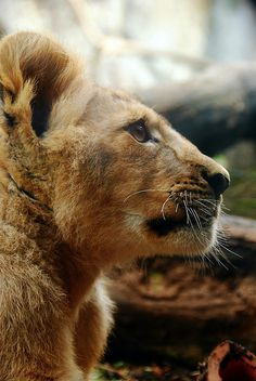 Just Can't Wait To Be King by Brynn Tweeddale