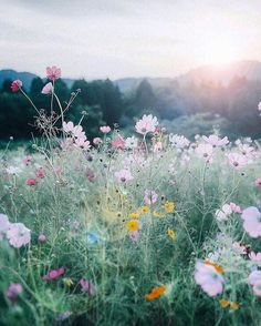 Painting inspiration field of wildflowers with setting sun. Painting inspiration field of wildflowers with setting sun. The post Painting inspiration field of wildflowers with setting sun. appeared first on Ideas Flowers. Wild Flowers, Beautiful Flowers, Field Of Flowers, Cosmos Flowers, Meadow Flowers, Exotic Flowers, Fresh Flowers, Purple Flowers, All Nature