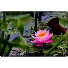 Zen Garden...