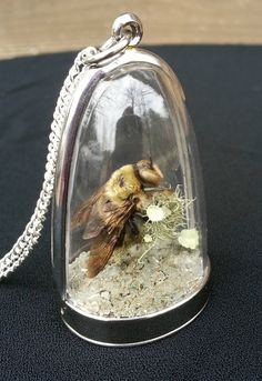 Carpenter Bee Specimen Terrarium Shadowbox Pendant Necklace Diorama Taxidermy Insect Art Natural History Curiosity Oddity jewelry Bumble Bee
