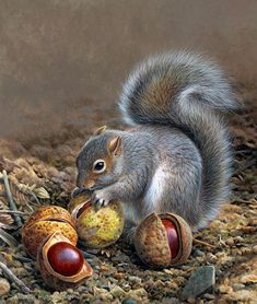 Andrew Hutchinson, Squirrel and chestnuts. ❣Julianne McPeters❣ no pin limits Nature Animals, Woodland Animals, Animals And Pets, Baby Animals, Funny Animals, Cute Animals, Art Nature, Wildlife Paintings, Wildlife Art