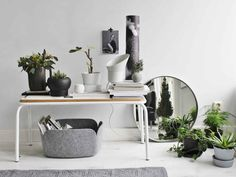 White and gray, black and greens, nordic still