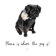 Learn more details on funny pugs. Check out our site. Black Pug Puppies, Dogs And Puppies, Teacup Pug, Teacup Chihuahua, Pug Quotes, Animals And Pets, Cute Animals, Animals Beautiful, Pug Tattoo