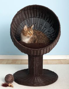 the purrrr-fect perch for your feline friend