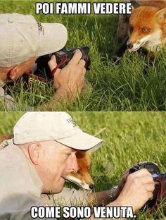 Foto Divertente: Volpe che guarda una foto insieme al fotografo