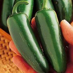 Mucho Nacho Hybrid hot pepper