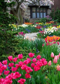 Fall in love with this spring flower inspired front yard. The design is dedicated to colorful tulips, daffodils, lirios, and other green plants. Not only that, the flowering dogwood stars in the scene. Tulips Garden, Garden Bulbs, Daffodils, Flower Garden Images, Flower Landscape, Autumn Garden, Easy Garden, Garden Ideas, Beautiful Gardens