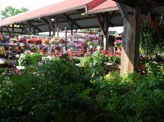 Flower Day | Toledo Farmers Market