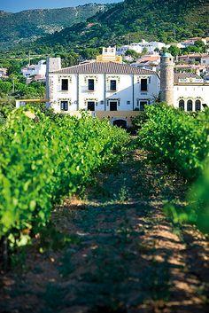 Mas d'en Coll de Roses  Vista de les vinyes del celler Coll de Roses.Alt  Empordà Catalonia