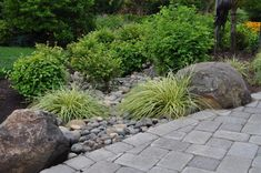 way to deal with downspout... rock bed to divert rain, native plants absorb excess water soften area