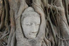 Ayutthaya - Budda head in tree