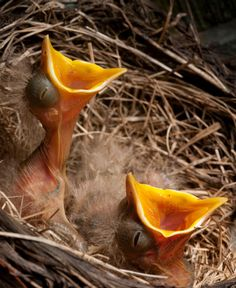What to Do if You Find a Baby Bird Out of the Nest - Bird Pet Care Corner - PetSolutions