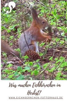 Live Animals, Funny Animals, Beautiful Birds, Animals Beautiful, Squirrel Pictures, Squirrel Feeder, Wood Animal, Nature Paintings, Chipmunks