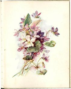 Illustrationof violets from 'Violets to Greet You' Published by Cupples and Leon, New York.