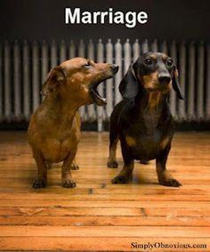 El matrimonio #fb