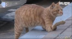"She Found This ""Broken"" Cat Nobody Would Help, Now WATCH What She Does... OMG!! This Is BEAUTIFUL!"