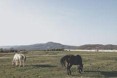 #vsco #vscocam #vscohungary #bevsco #vscogrid by tapiir
