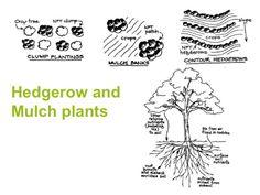 Soil Building Techniques Part 4