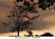 Smokey Sunlight - stock photo