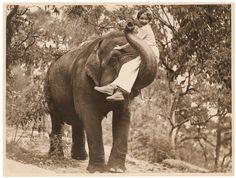 Hollywood star Helen Twelvetrees riding an elephant
