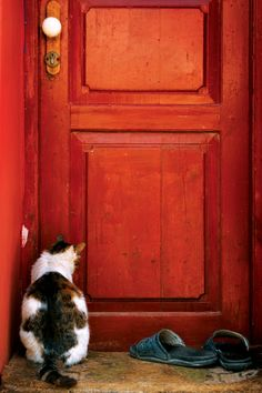 """Cats hate a closed door, you see, regardless of which side they're on.  If they're out they want to be in, and if they're in they want to be out."" --Lillian Jackson Braun"