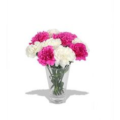Carnations flowers for Get well soon. Send these vibrant one dozen of Pink and White Carnations with vase for your sister. Beautiful Flowers Images, Flower Images, Online Flower Shop, Classic Beauty, Carnations, Fascinator, Bouquet, Vibrant, Vase