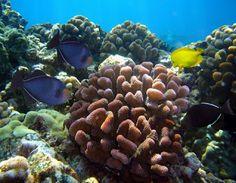 Maui Vacation Guide: Best Snorkeling Spots on Maui