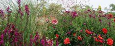 Hoe gebruik je dahlia's in de tuin.-- Subtiel op kleur in geraffineerde vaste planten borders.-- Modern en minimalistisch in de grassenborder. -- Exotisch vlammende kleuren in de nazomerborder-- Nostalgisch tussen traditionele boerentuinplanten. -- In potten op het terras.-- In de moestuin en in de volkstuin.-- Enkelbloemige dahlia's als vlinder en bijenplanten. Dahlia's zijn perfecte langbloeiende borderplanten, voor veel verschillende tuinstijlen.