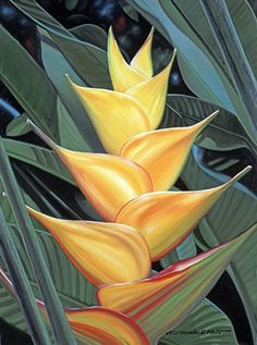 Yellow Heliconia - Brian Marshall White