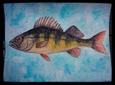"Perch - natamad, Nata Lappi (@natamad) Instagramissa: ""#natamadart #painting #watercolour #fish #finnishart #ahven"""