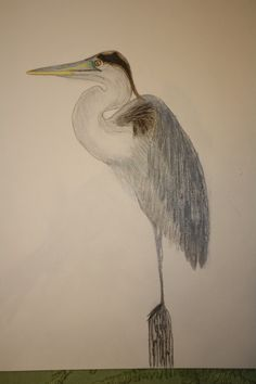 Blue heron in colored pencil by Denise Crawford