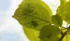 Il pesticida naturale al 100%