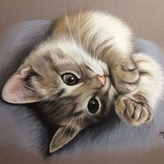 Virginie Agniel chat trop mighonchat trop mignon et drole trop mignon dessinphoto de chat mignon et rigolochat drolevideos de chats trop mignonschat mignon dessin Animal Sketches, Animal Drawings, I Love Cats, Cool Cats, Kittens Cutest, Cats And Kittens, Gato Gif, Image Chat, Domestic Cat