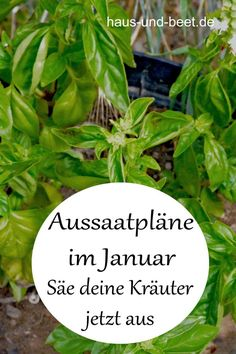 Aussaatpläne im Januar - Das neue Gartenjahr beginnt Sowing plans in January. In the spring you can harvest fast-growing vegetables. Now sow salad, herbs and several flowers. Seed for your garden, see Garden Types, Herb Garden Design, Vegetable Garden Design, Garden Ideas, Fast Growing Vegetables, Growing Herbs, Potager Garden, Garden Plants, Indoor Plants