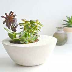 beautifully simple, these concrete planters make a perfect home for your succulents!